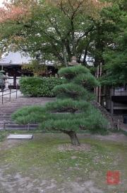 Japan 2012 - Kyoto - Oyahon Temple - Tree