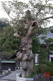 Japan 2012 - Kamakura - Hase-dera - Tree