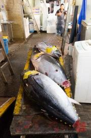 Japan 2012 - Tsukiji - Fish Market - Tuna I