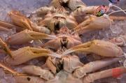 Japan 2012 - Tsukiji - Fish Market - Crabs