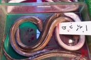 Japan 2012 - Tsukiji - Fish Market - Infinite Eels