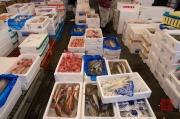 Japan 2012 - Tsukiji - Fish Market - Fishes II