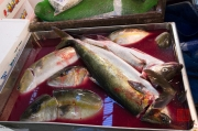 Japan 2012 - Tsukiji - Fish Market - Blood bath