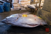 Japan 2012 - Tsukiji - Fish Market - Tuna III