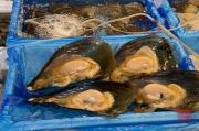 Japan 2012 - Tsukiji - Fish Market - Clams III