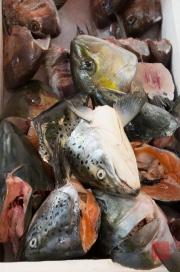 Japan 2012 - Tsukiji - Fish Market - Salmon Heads