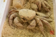 Japan 2012 - Tsukiji - Fish Market - Sandy Crab