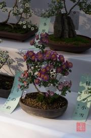 Japan 2012 - Shibuya - Meiji Shrine - Bonsai Flower II
