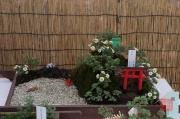Japan 2012 - Shibuya - Meiji Shrine - Bonsai Garden III