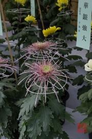 Japan 2012 - Shibuya - Meiji Shrine - Flowers II
