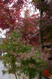 Japan 2012 - Miyajima - Daisho-in - Red Leaf