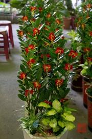 Taiwan 2012 - Taipei - Jianguo Holiday Flower Market - Geldbaum