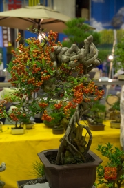 Taiwan 2012 - Taipei - Jianguo Holiday Flower Market - Bonsai I