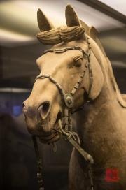 Xian 2013 - Terracotta Army - Horse
