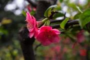 Chongqing 2013 - Eling Park - Flower