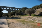 Nimes 2014 - Aqueduct - Olive Tree & Aqueduct