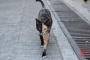 Hongkong 2014 - Tao-O - Two colored cat