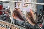 Hongkong 2014 - Tao-O - Half-fishes