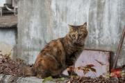 Hongkong 2014 - Stanley Harbour - Cat