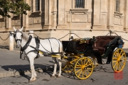 Seville 2015 - Carriage