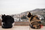 Granada 2015 - Alhambra - Cats