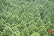 Taiwan 2015 - Forest Symmetry