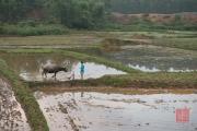 Vietnam 2016 - Water buffalo