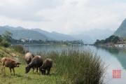 Phong Nha 2016 - Bulls