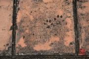 Hue 2016 - Cat footprints